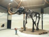 Das Siegsdorfer Mammut